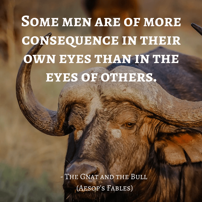 Life Lessons From Aesop's Fables _ the gnat and the bull quotes