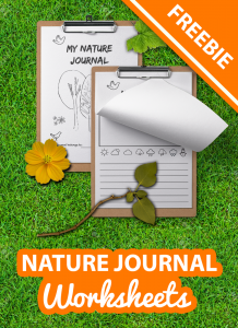 nature journal freebie for kids by imagine forest