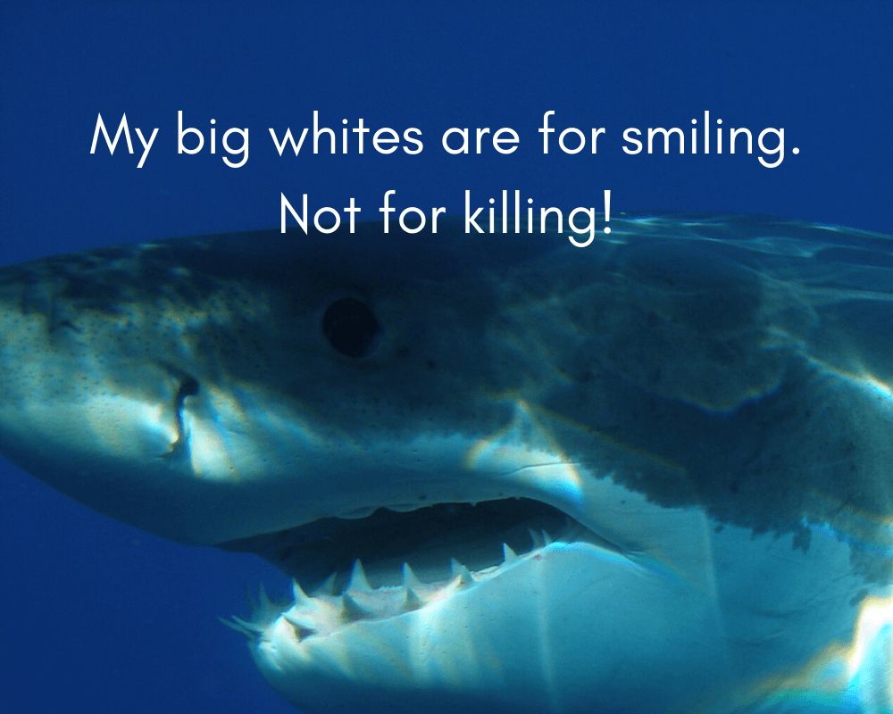 Sharks Teeth Poems 1