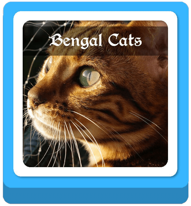 bengal warrior cat names