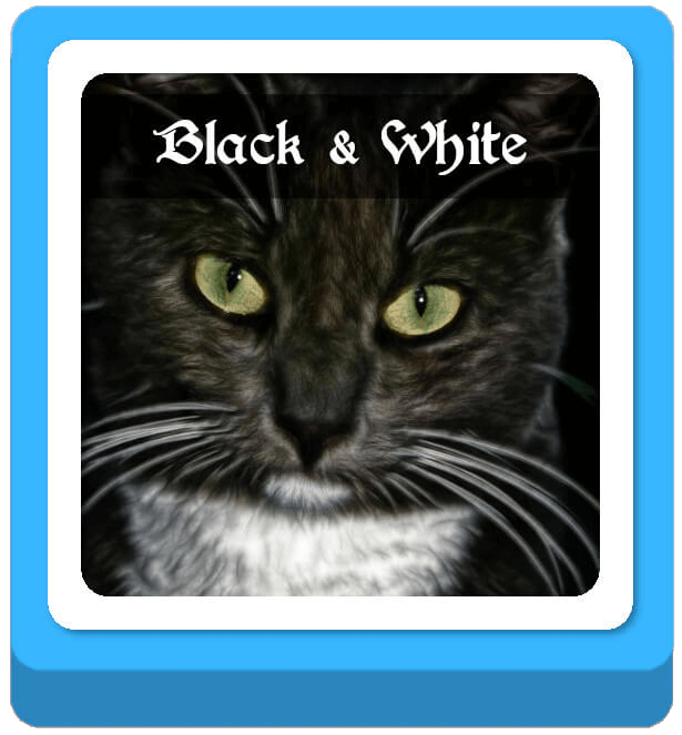 black and white warrior cat names