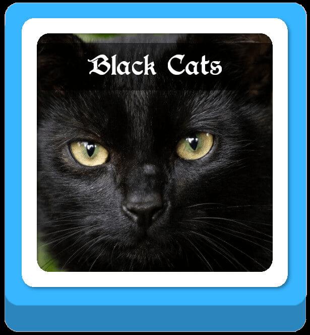 black cat warrior cat names