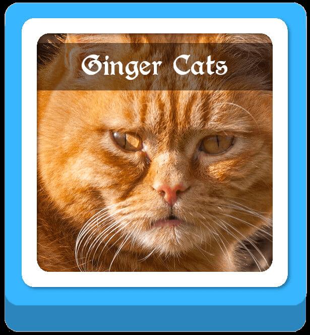 ginger cat warrior cat names