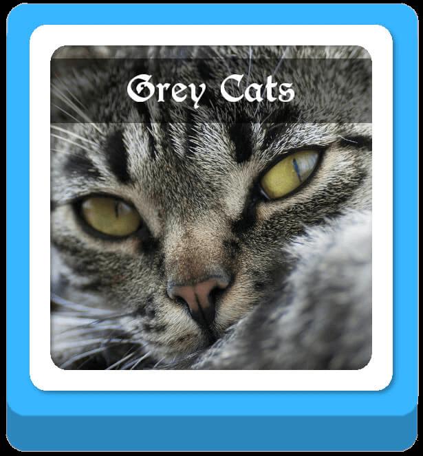 grey cat warrior cat names