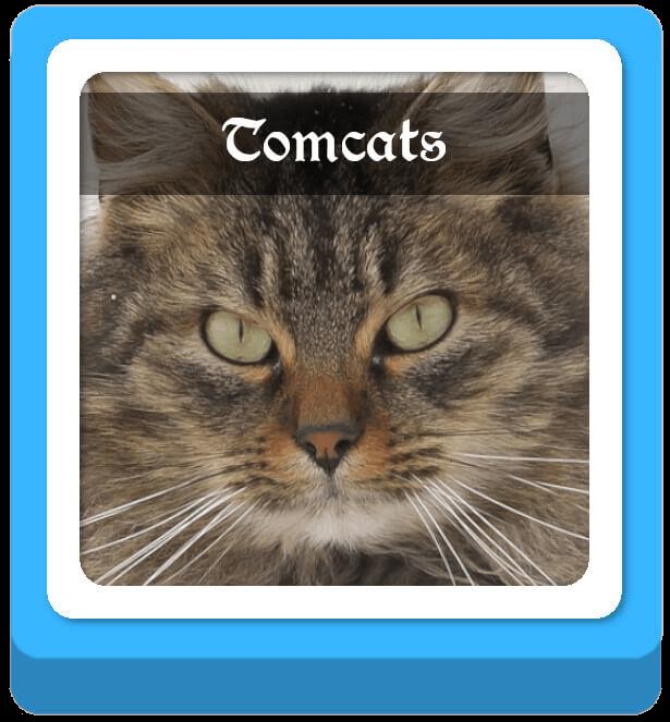 tomcats warrior cat names
