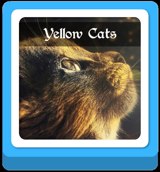 yellow cat warrior cat names